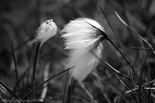 """Windswept"" Copyright (c) Roxana Enache"
